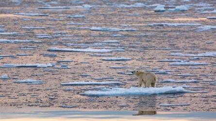 007-03-the-end-of-the-polar-bear